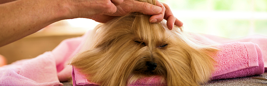 how to become a pet groomer in pa
